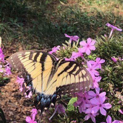 12 – Healing at Bethesda and its Repercussions